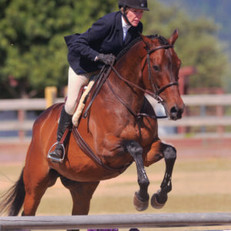 Blue Water Farms Rescue CA Top Horse Trainers In the area