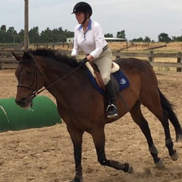 Blue Water Farms Rescue CA Lease or Own a Horse
