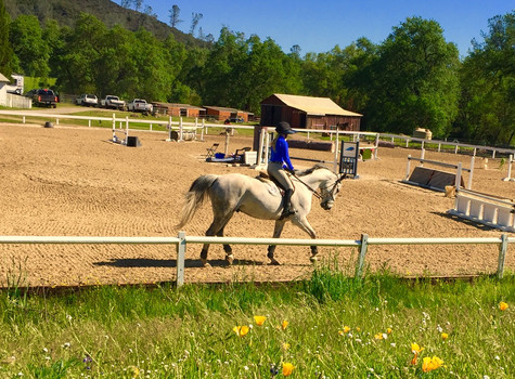 Blue Water Farms Rescue CA Equestrian Lessons for all ages