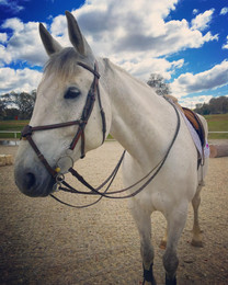 Blue Water Farms Rescue CA Professional Horse Riding Lessons for Kids
