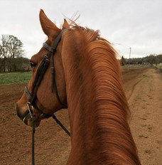 Blue Water Farms Rescue CA Experienced Horse Trainers Near Me