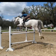 Blue Water Farms Rescue CA Competitive Equestrian Trainers