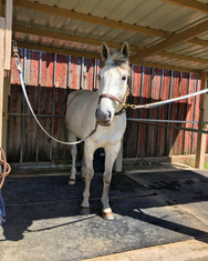 Blue Water Farms Rescue CA Horse training