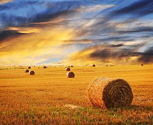 depositphotos_4471035-stock-photo-golden-sunset-over-farm-field.jpg
