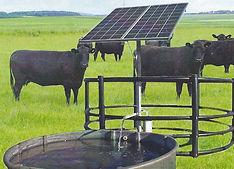 PP Pic w cows.jpg