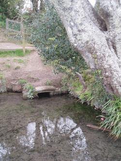 St Petrocs Well