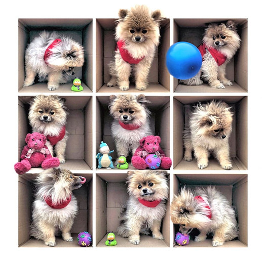 Mcleod Dog 1.jpg