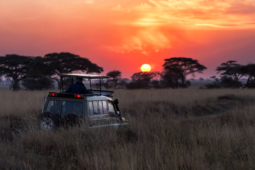 namibia-safari.jpg