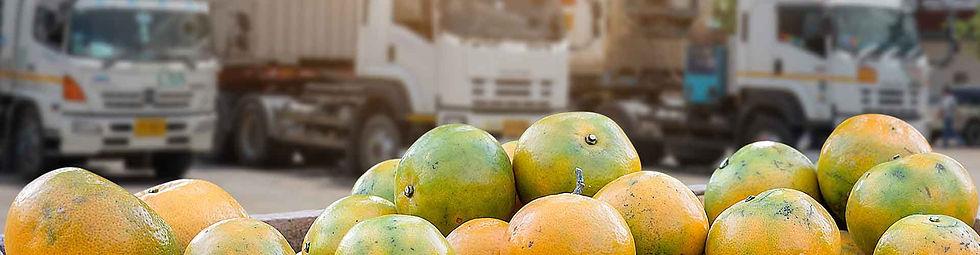 Transworld Cargo Perishable goods