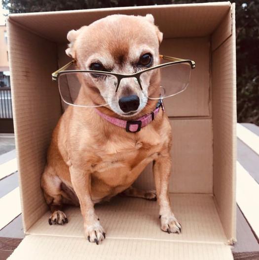 Mcleod Dog 2.jpg