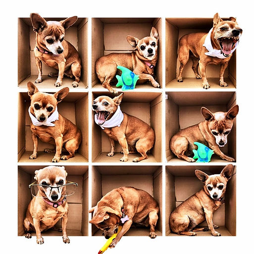 Mcleod Dog.jpg