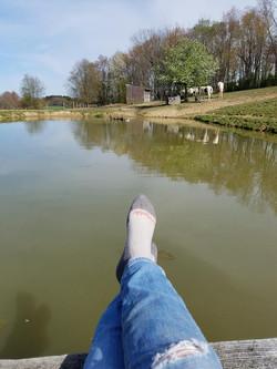 Pond in Gelding Field