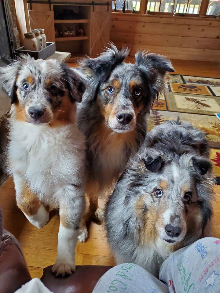 Emmett, Tucker & Levi