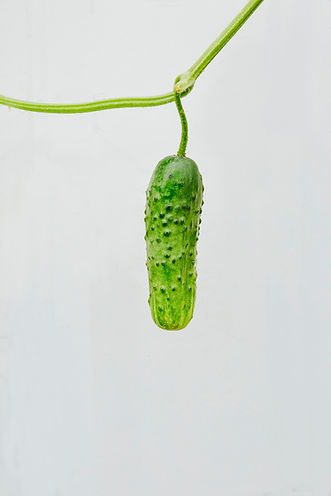 7082 Cucumber.jpg