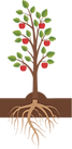 fruit bearing tree.png