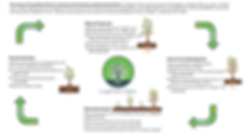 Living Roots Diagram 2.0.png