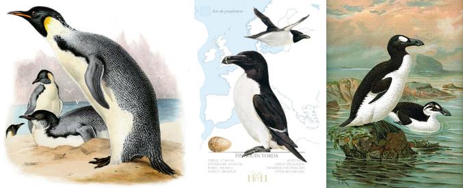 Comme le Grand Pingouin, l'entrepreneur pourraît disparaître