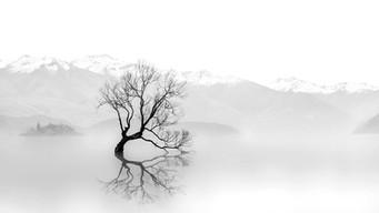 "Chairlady Award - Monochrome - ""Lonely Tree"" - Chen Chu - Australia"
