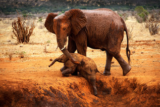 PFR Gold Medal - Nature -  Education elephant - Ge Xiao - China