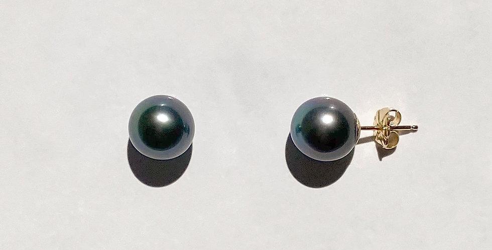 Stud Earrings (black Tahitian pearl)