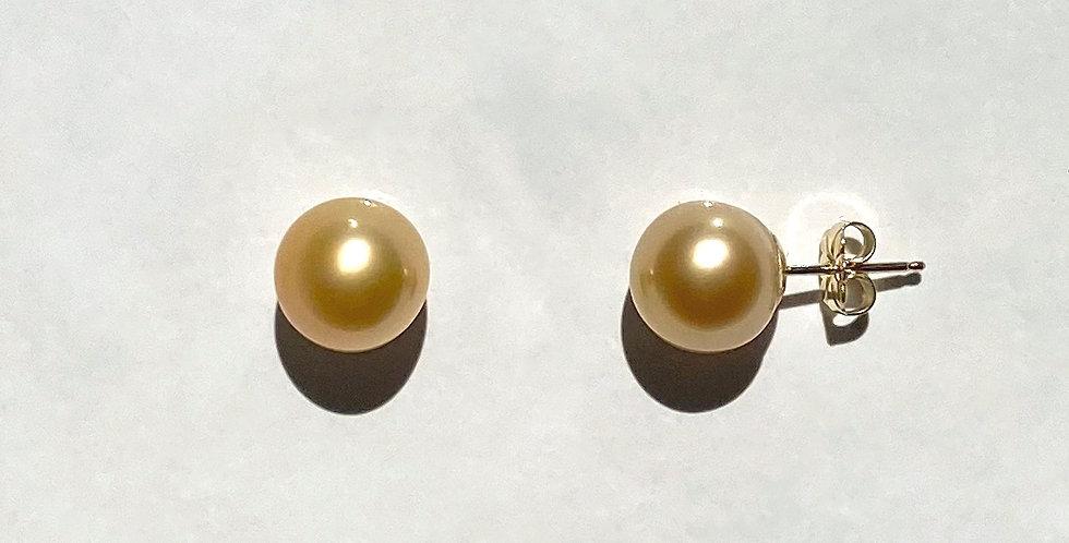 Stud Earrings (golden south sea pearl)