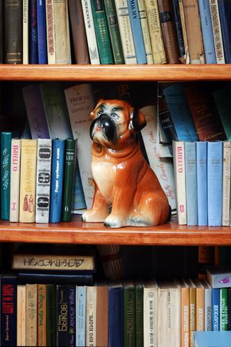 Dog interior photo