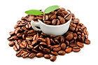 cafe_organico1.jpg