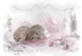 Hg-Wilzenberg-kitten1.jpg