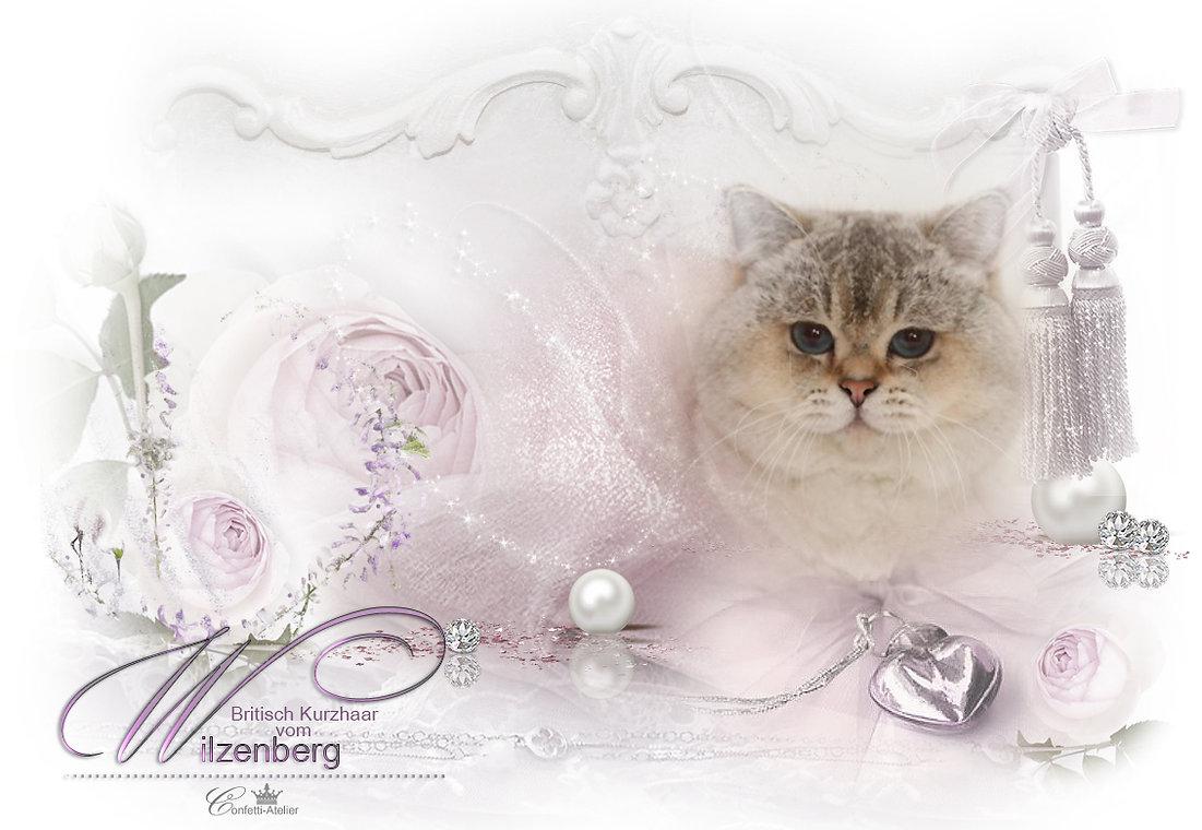 Hg-Wilzenberg_kater.jpg