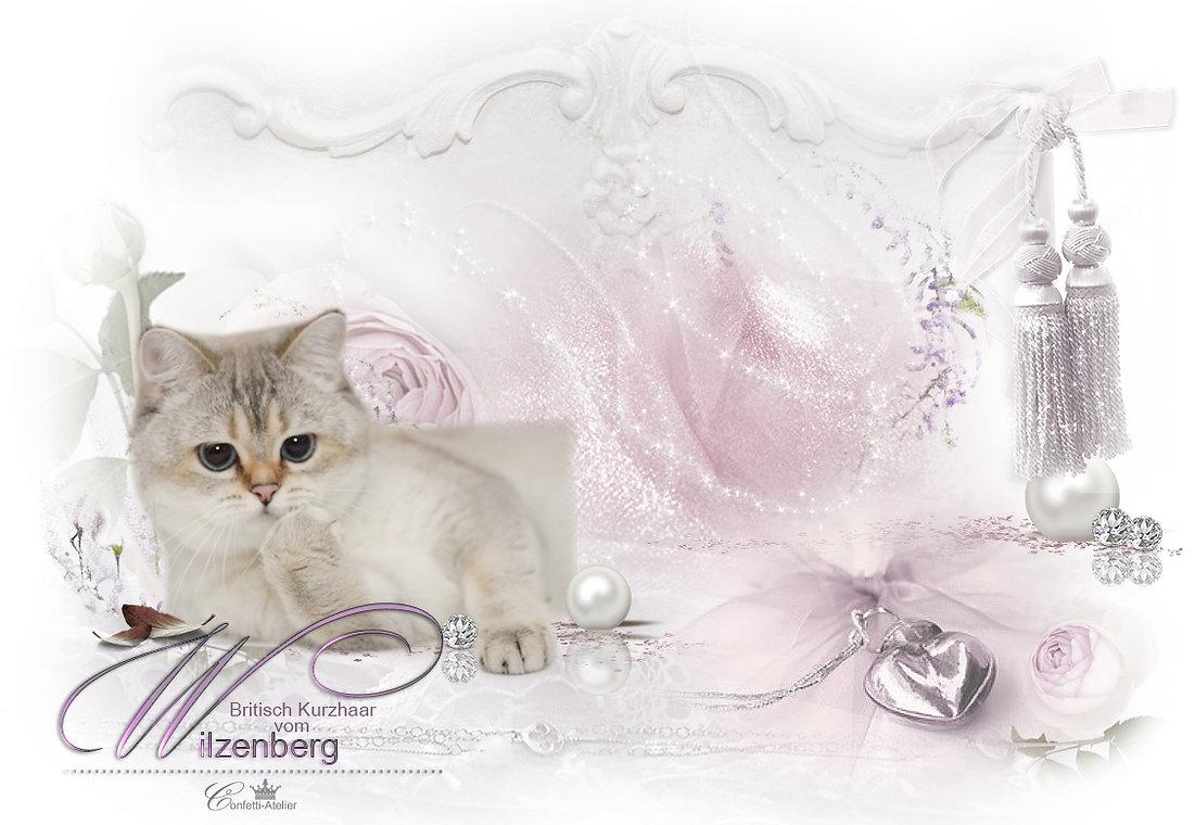 Hg-Wilzenberg_uns.jpg