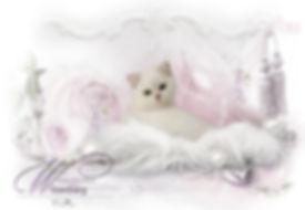 Hg-Wilzenberg-kitten.jpg