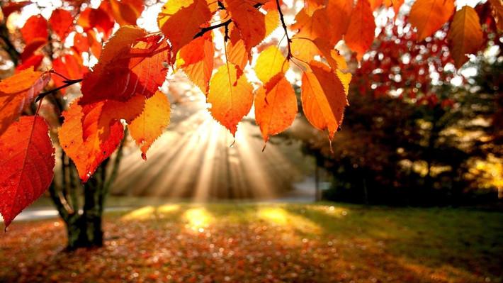 Сладкий октябрь. Скидки от BeGoodi