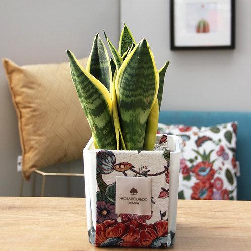 Sansevieria in vaso vetro/tessuto D 14 cm x H 35 cm - Linea Tramonto