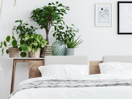 Le piante che fanno bene al sonno