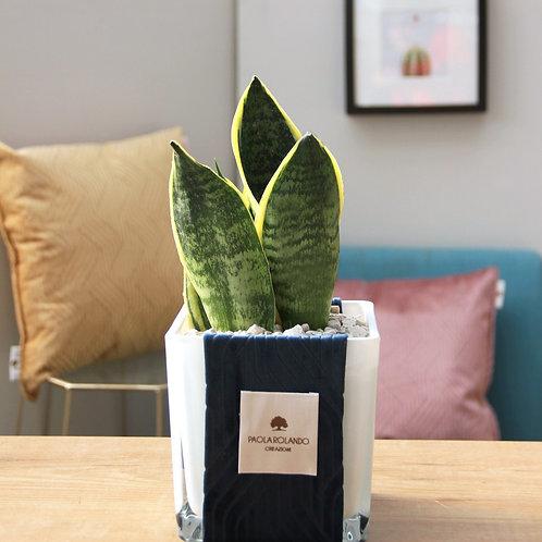 Bonsai in vaso vetro/tessuto  D 14 cm x H 35 cm - Linea Velvet