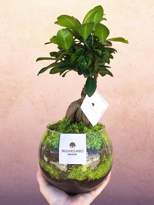 Bonsai in vaso vetro D 14 cm x H 35 cm - Linea Amazzonia