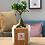 Thumbnail: Bonsai in vaso vetro/tessuto  D 14 cm x H 35 cm - Linea Velvet