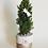 Thumbnail: Pinetto Linea Flora