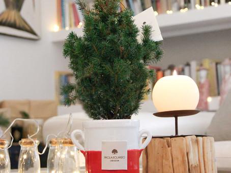5 Buoni motivi per scegliere il pinetto di Natale small-size