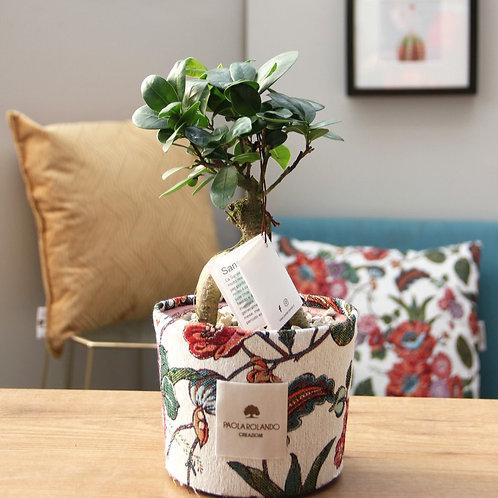 Bonsai in vaso cemento/tessuto D 14 cm x H 35 cm - Linea Tramonto