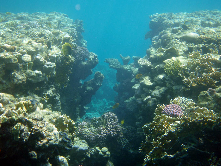 Коралловый распадок
