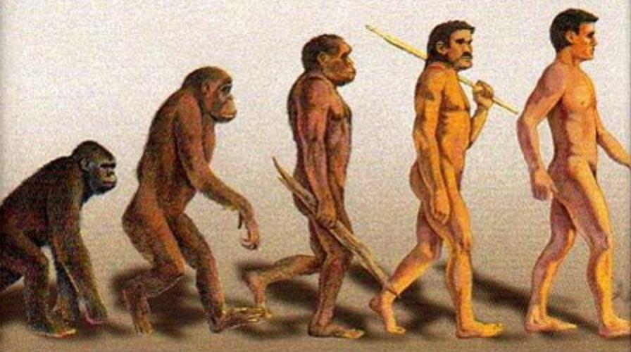 evolutie.png