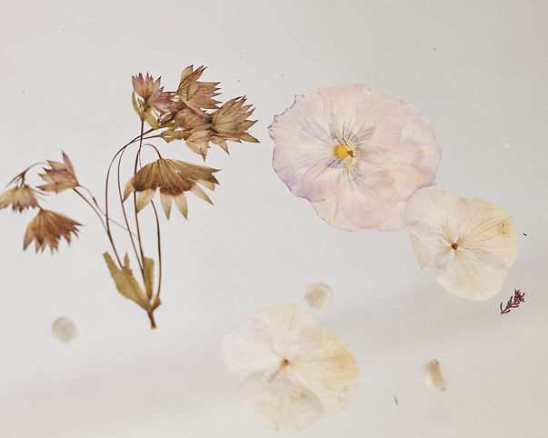 Fleur_S03_012.jpg