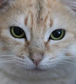 Chats à adopter au refuge de l'arpa 47 à boé à proximité d'agen
