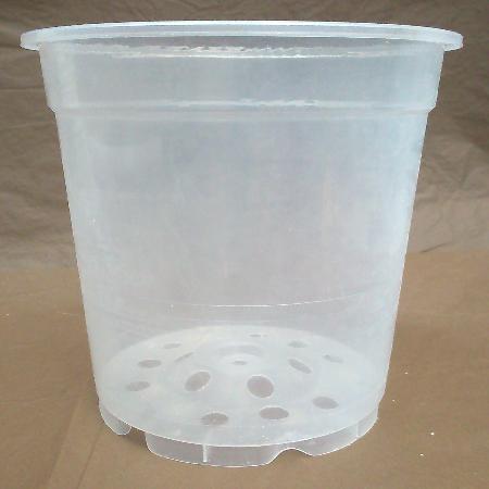 Maceta/Pot 12cm