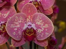 comprar orquídeas botánicas catálogo