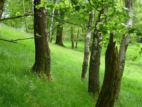 Trees_climate_solution_near_Wath_Iain_Mann.jpg