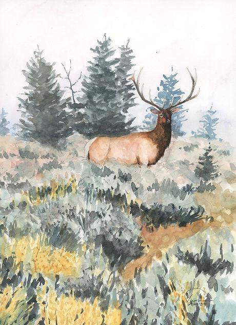 Elk in Sage 9x12 lo res.jpg