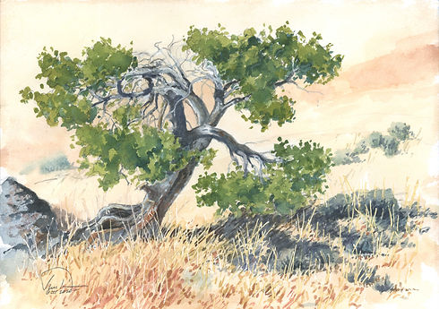 bent tree 9x12 lo res.jpg