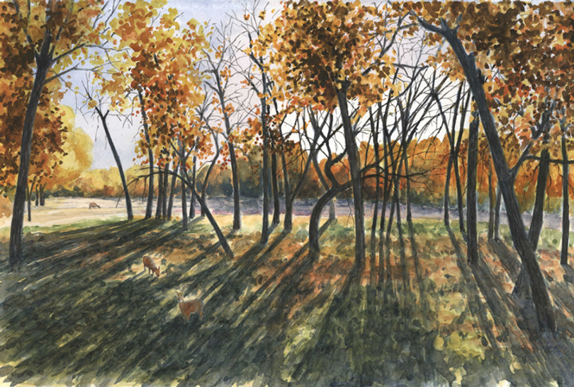 fall shadows 14x20 lo res.jpg